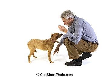 entrenamiento, obediencia, perro