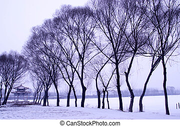 snow scenery in a park
