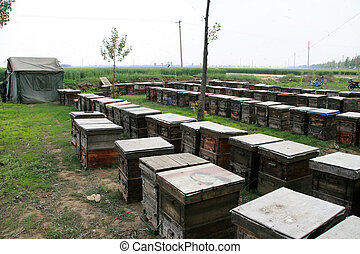wooden hives in the outdoors, north china