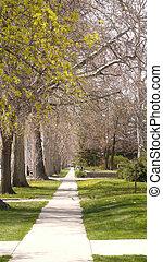 calçada, alinhado, árvores
