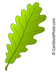 Leaf of oak tree, nature object, isolated