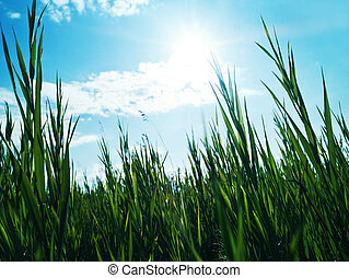 Green grass under the bright sun light, abstract backgrounds