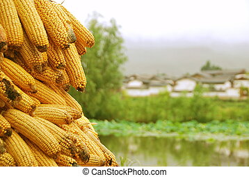 Corncobs - View of a pile of corncobs over a soft village...
