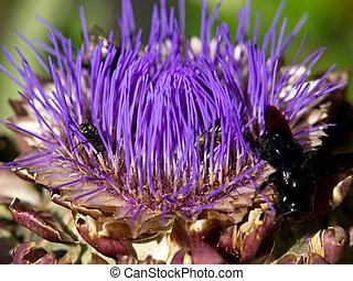 artichoke  - insect on purple artichoke flower