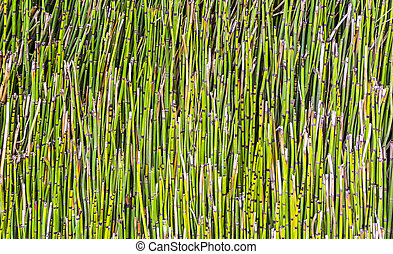 pattern of small bamboo plant