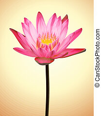 Oriental Flower Lotus. Vector Exotic Plant