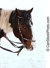 A horse. - Horse head close-up.