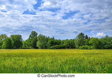 Field in Aueweiher Park in Fulda, Hessen, Germany