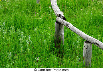 Wooden fence in the grassland