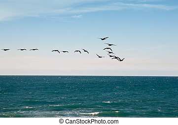 Sea and migratory birds. - Flock of birds flying over the...