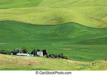 Wavy Wheat Fields - The rolling hills of Palouse, Washington...