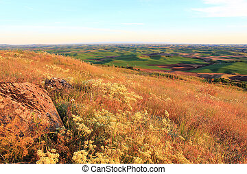 Hills of Palouse with Wild Flowers - The beautiful hills of...
