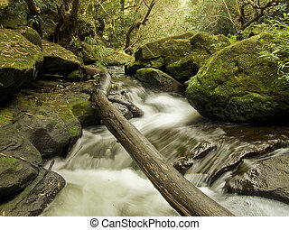 Fallen Tree over Secluded Stream