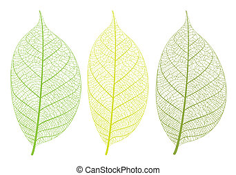 Vector leaf - Vector leaves on white background