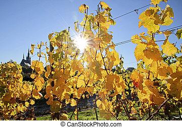 Vineyard in autumn near Kiedrich, Rheingau, Hesse, Germany