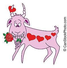 Valentine, cabra