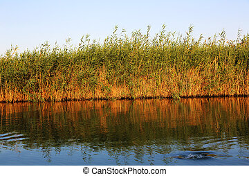 Reed bed Syracuse - evning light at the reed bed in the...