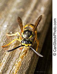 毀壞, 黃蜂, 木頭