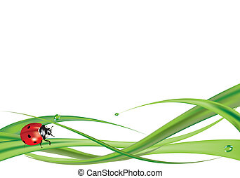 Ladybug on grass 2 - Ladybug on grass isolated on white...