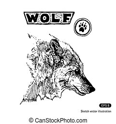 Wolf. Hand drawn vector isolated on white