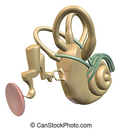 Inner ear three-quarter view - 3D rendering of the Inner ear...