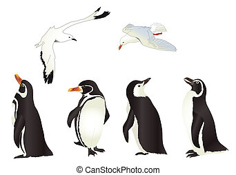 Penguins and Seagulls with simple gradients isolated on...