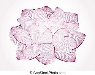 vecteur, lotus, fleur, isolé, whi