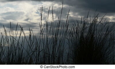 steppe grass on a background cloudy sky