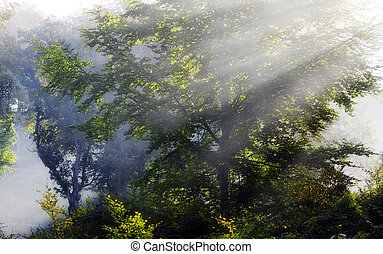 Misty Sunbeam on trees