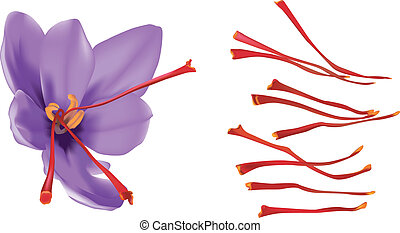 Saffron flower isolated on white background