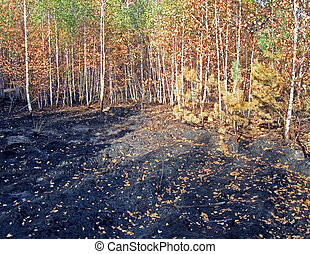 abstract forest after fire, stress, environment details
