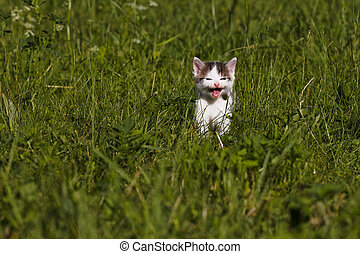 lost kitten in the grass looking for mom and meow
