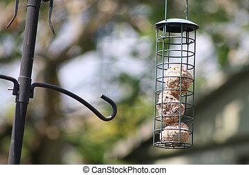 bird feeder - wild bird feeder