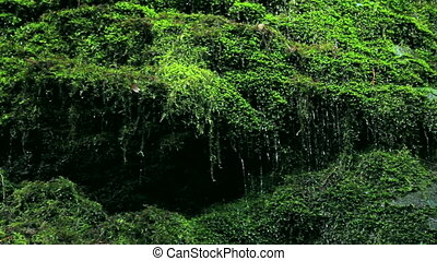 green moss, water dripping down