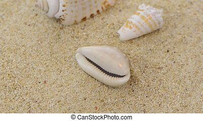 Rotating shells - Closeup of rotating shells and beach sand...