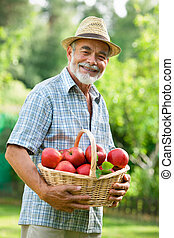 Gardener with a basket of ripe apples