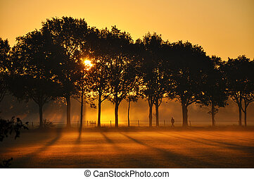Silhouettes at Sunrise - Sunrise Silhouettes of trees and a...