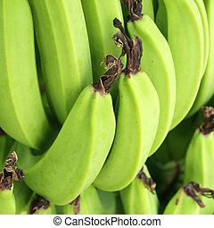 Green Bananas on a tree, Thailand.