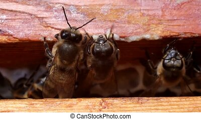Bees are always active Certain groups of insects perform...