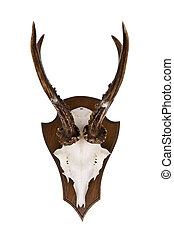 Roebuck horns as wall decoration isolated on a white...