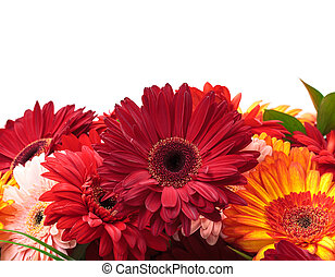 Vibrant Colorful Daisy Gerbera Flowers with sample text