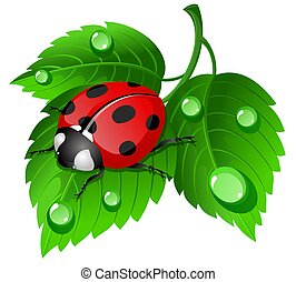 Ladybug on leaf - illustration of ladybug on leaf with...