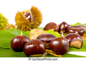 Chestnuts and chestnuts husks Isolated on white