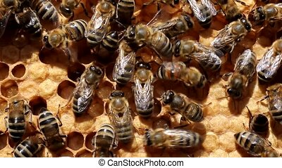 Work of the bees in hive - Bees are constantly moving. They...