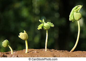 Plant growth-Baby plants - Plant evolution -New life