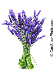 bunch of lavender - a bunch of lavender on a white...