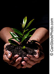 New life - A shot of hands holding a new plant, symbolizes...