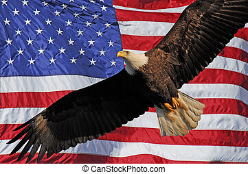 Bald Eagle American Flag - Bald Eagle with wings spread in...