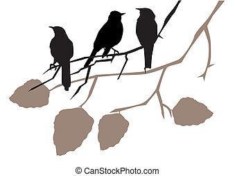 birds - vector birds on branches