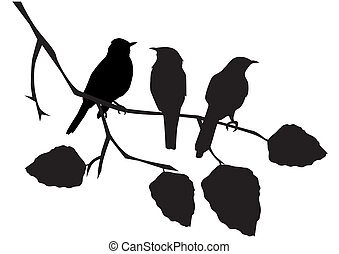 birds - vector birds on the branch